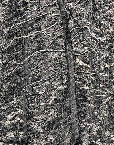 Dark Woods on Snow, Banff, Canada. Fotografía Fine Art de Paisaje en Blanco y Negro de Jesús Coll