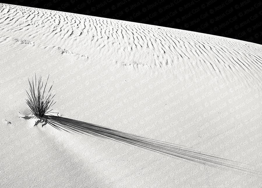 Desert Bush, White Sands Nat'l. Mnt., New Mexico, USA. Fine Art B&W Landscape Photography by Jesus Coll