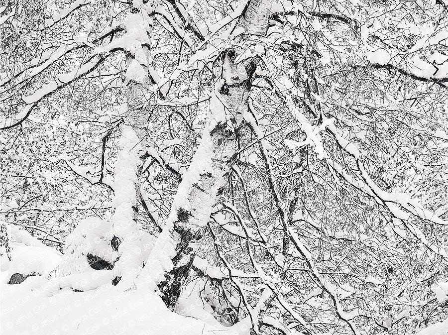 Neu Recent, Parc Nacional d'Aigüestortes, Lleida, Spain. Fine Art B&W Landscape Photography by Jesus Coll