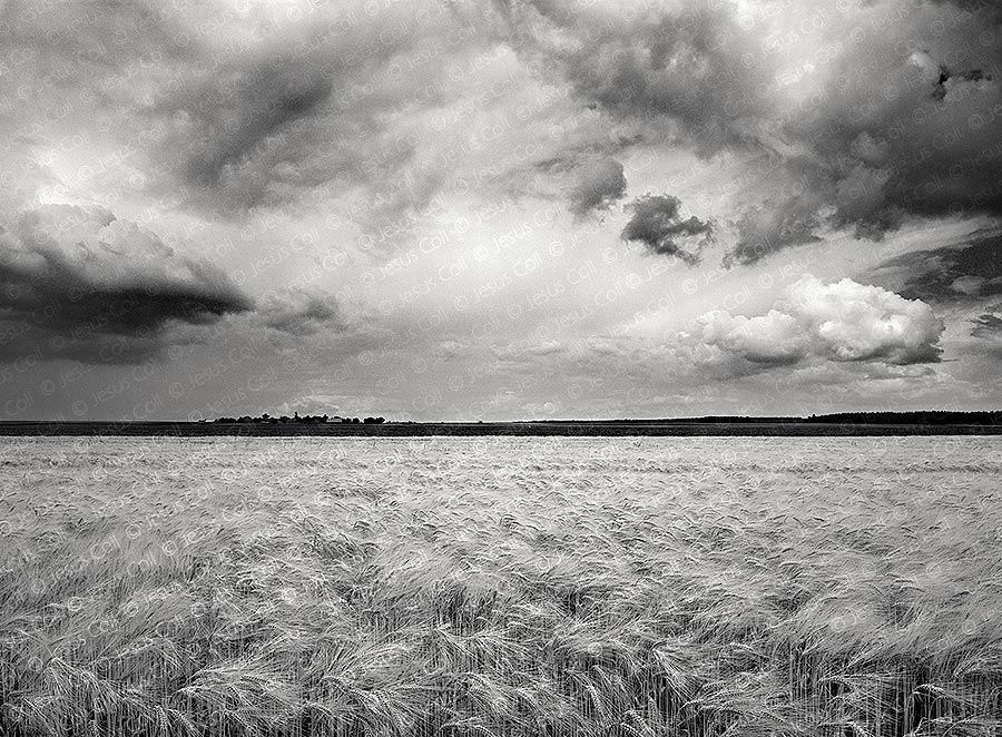 Barely Field, Tours, France. Fine Art Landscape B&W Photography by Jesus Coll